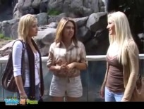 animal attraction1 big,high,lesbian,